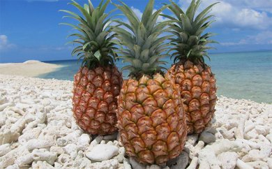 竹富町 西表島パイナップル