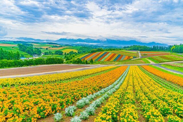 北海道のふるさと納税について