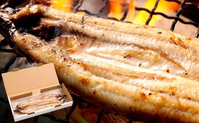 宮崎県新富町のうなぎの返礼品 白焼き
