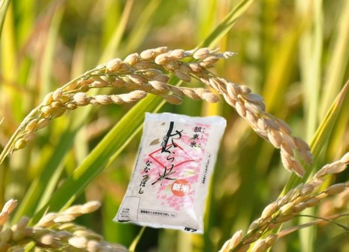 毎月届く定期便「厚真のお米」10kg 寄附金額 140,000円(北海道 厚真町)