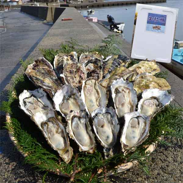 能登穴水の牡蠣(殻付) 寄附金額10,000円 (石川県穴水町)