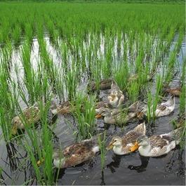 特別栽培米ミルキークイーン玄米 5kg 寄付金額20,000円(長野県高山村)