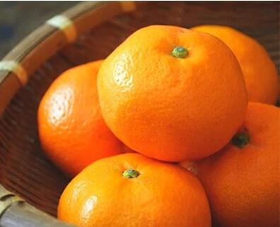 【紀州伝統の味】下津蔵出しみかん 約3kg【混合サイズ】