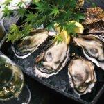 【生食やむき身も】ふるさと納税牡蠣(カキ)のおすすめ返礼品!