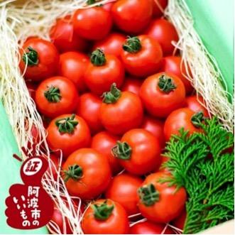 フルーツトマト「星のしずく」900g 寄付金額10,000円 (徳島県阿波市)
