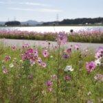 福岡県 小竹町のふるさと納税のご紹介
