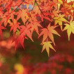 滋賀県 甲良町のふるさと納税のご紹介