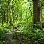 鳥取県 日吉津村のふるさと納税のご紹介