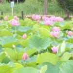 岡山県 久米南町のふるさと納税のご紹介