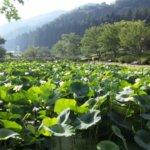 福井県 南越前町のふるさと納税のご紹介