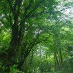 鳥取県 江府町のふるさと納税のご紹介