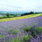 北海道 富良野市のふるさと納税のご紹介