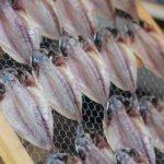 静岡県 熱海市のふるさと納税のご紹介