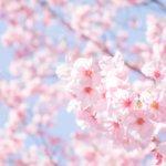 茨城県 利根町のふるさと納税のご紹介
