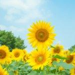 栃木県 野木町のふるさと納税のご紹介