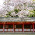 京都府 八幡市のふるさと納税のご紹介