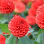 奈良県 川西町のふるさと納税のご紹介