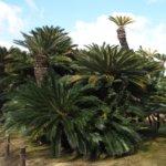 鹿児島県 中種子町のふるさと納税のご紹介