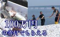 地曳網漁業体験&新鮮な海の幸バーベキュー! 寄附金額1,000,000円 (泉佐野市)