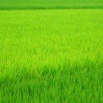 福岡県 東峰村のふるさと納税のご紹介