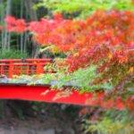 静岡県 伊豆市のふるさと納税のご紹介