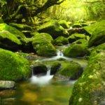 宮崎県 椎葉村のふるさと納税のご紹介