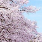 福岡県 築上町のふるさと納税のご紹介