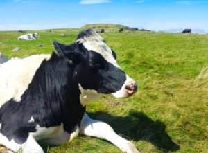 【第1位】丸ごと1頭【A5】博多和牛(800~900kg)寄付額12,000,000円