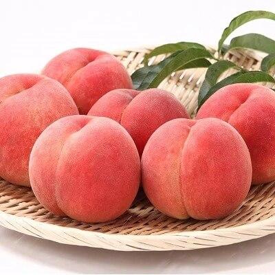 【果物王国 山形】たっぷり8回! さがえ産フルーツあじわい定期便