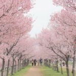 大阪府 大阪狭山市のふるさと納税のご紹介