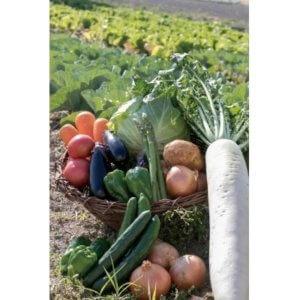 土佐の新鮮野菜!毎月ちょこっとどうぞ♪