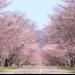 北海道 浦河町のふるさと納税のご紹介