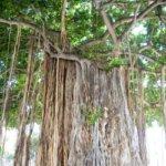 沖縄県 南大東村のふるさと納税のご紹介