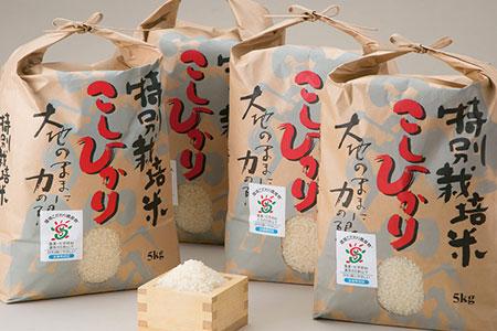 よこいファーム 特別栽培米コシヒカリA 寄附金額13,000円(滋賀県高島市)
