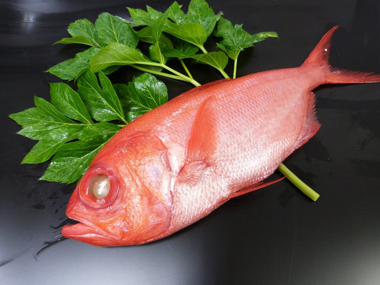 三崎水揚げ 金目鯛 3匹セット