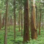 奈良県 下北山村のふるさと納税のご紹介