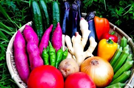 とれたて新鮮!旬の朝採れ野菜と高知県産コシヒカリ5kgのセット寄付金額30,000円(高知県須崎市)