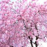 奈良県 東吉野村のふるさと納税のご紹介