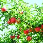 青森県 西目屋村のふるさと納税のご紹介