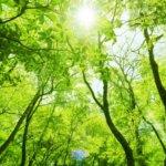 鳥取県 智頭町のふるさと納税のご紹介