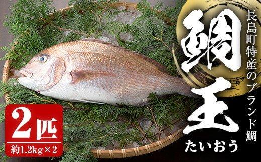 長島町特産の鯛王(2匹セット)