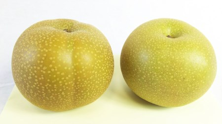 ジューシー果汁の梨(豊水) 約5g(ご家庭用) 寄附金額10,000円(和歌山県湯浅町)