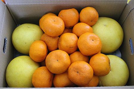季節の柑橘農家おまかせ 7kg(家庭用) 寄附金額10,000円(熊本県天草市)