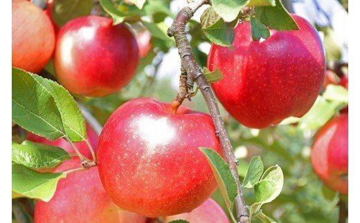りんご サンふじ 5kg 2021年産