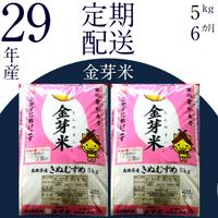 BG無洗米 金芽米 [定期] きぬむすめ5kg/6ヵ月 寄附金額40,000円(島根県安来市)