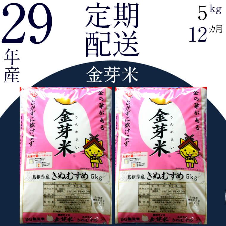 無洗米 金芽米 [定期] きぬむすめ5kg/12ヵ月 寄附金額80,000円(島根県安来市)
