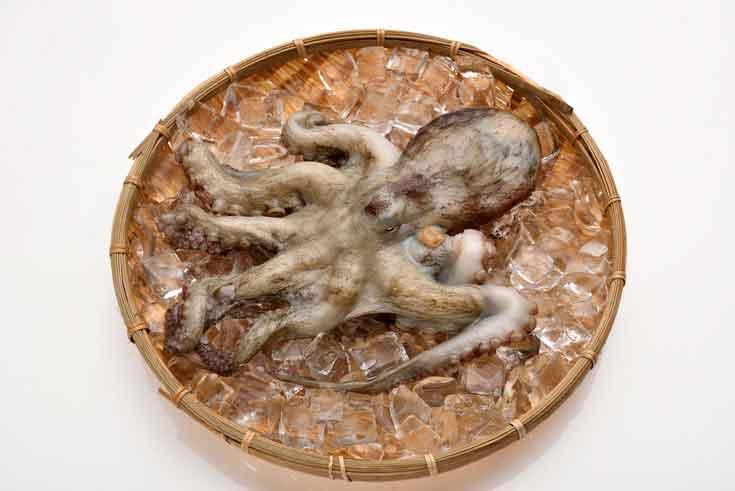 「愛海の恵み」大分豊後水道産 天然マダコ(約2kg 1~2杯)  寄附金額24,000円(大分県佐伯市) イメージ