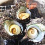 ふるさと納税 魚介類・海産物のおすすめ返礼品まとめ