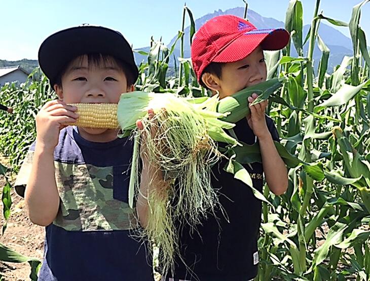 環境保全型農業推進コンクール受賞「生育時期に農薬を極力使わずに育てた」とうもろこし 寄附金額10,000円(長崎県南島原市) イメージ