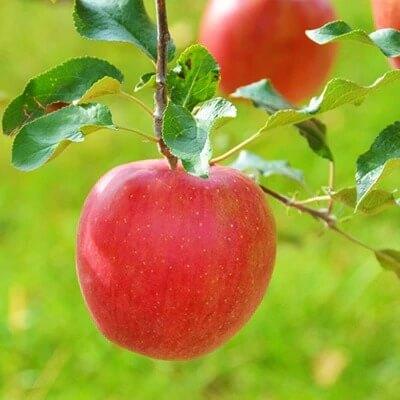 2018年ふるさと納税 特産品(野菜やフルーツ)高還元率ランキングベスト5!